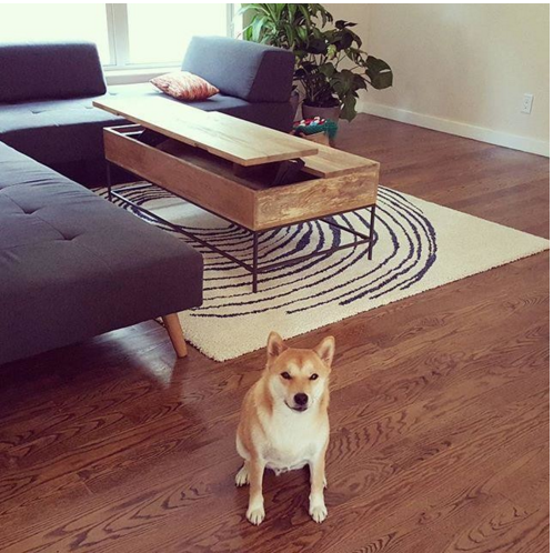 6 Tips For Styling A Pet-Friendly Pad