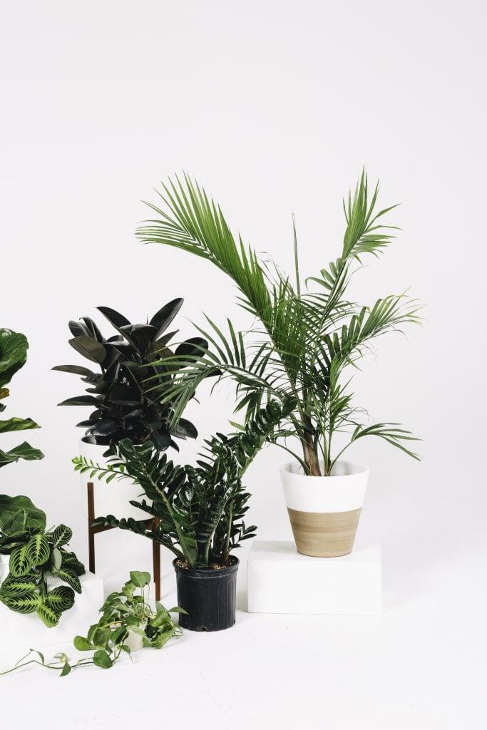 10 Perfect Patio Planters