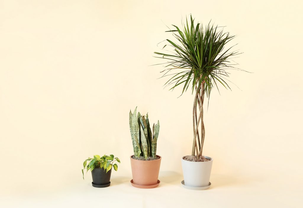 The Best Indoor Plants for Your Home Office