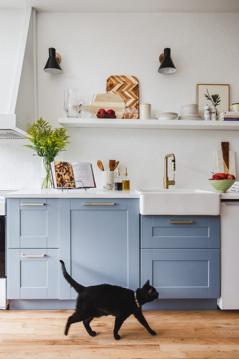 cat with painted cabinets