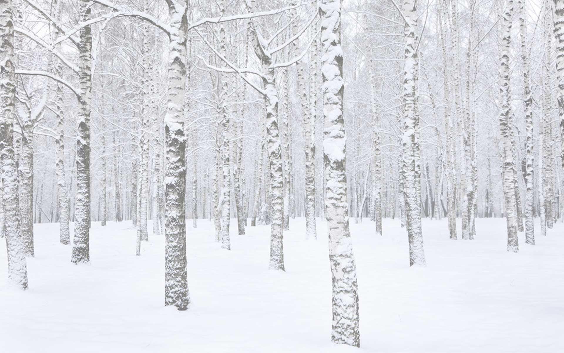 Birchtree-designs-whistler-birch-snow1